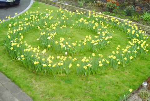 daffodil spiral for kids garden design