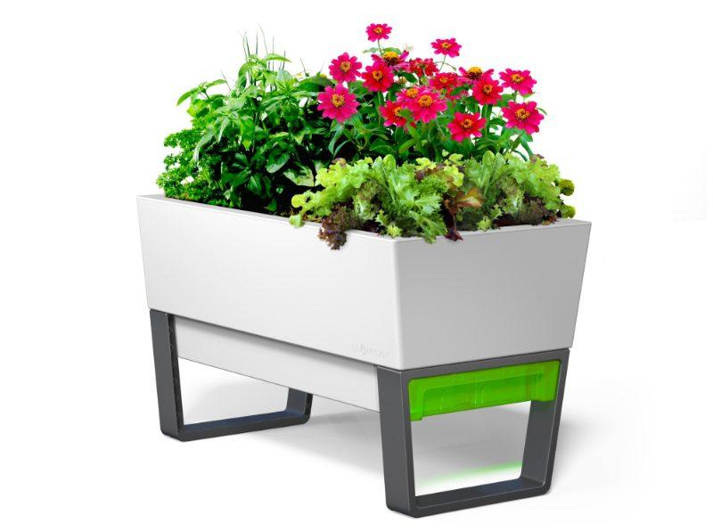 Vegetable Garden Design Ideas The Glowpair