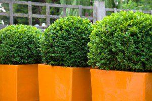 Fibreglass planters for family garden in Essex