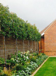 Leigh-on-Sea landscaper needed for garden design privacy