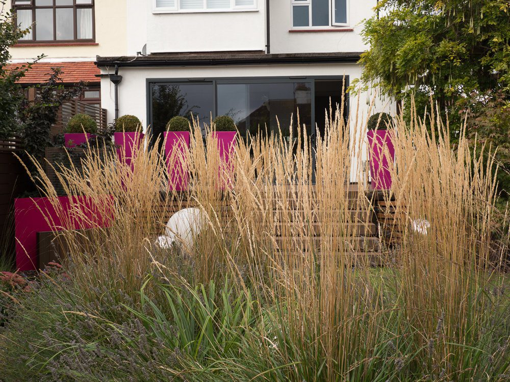 family-friendly garden with grass acting as a translucen