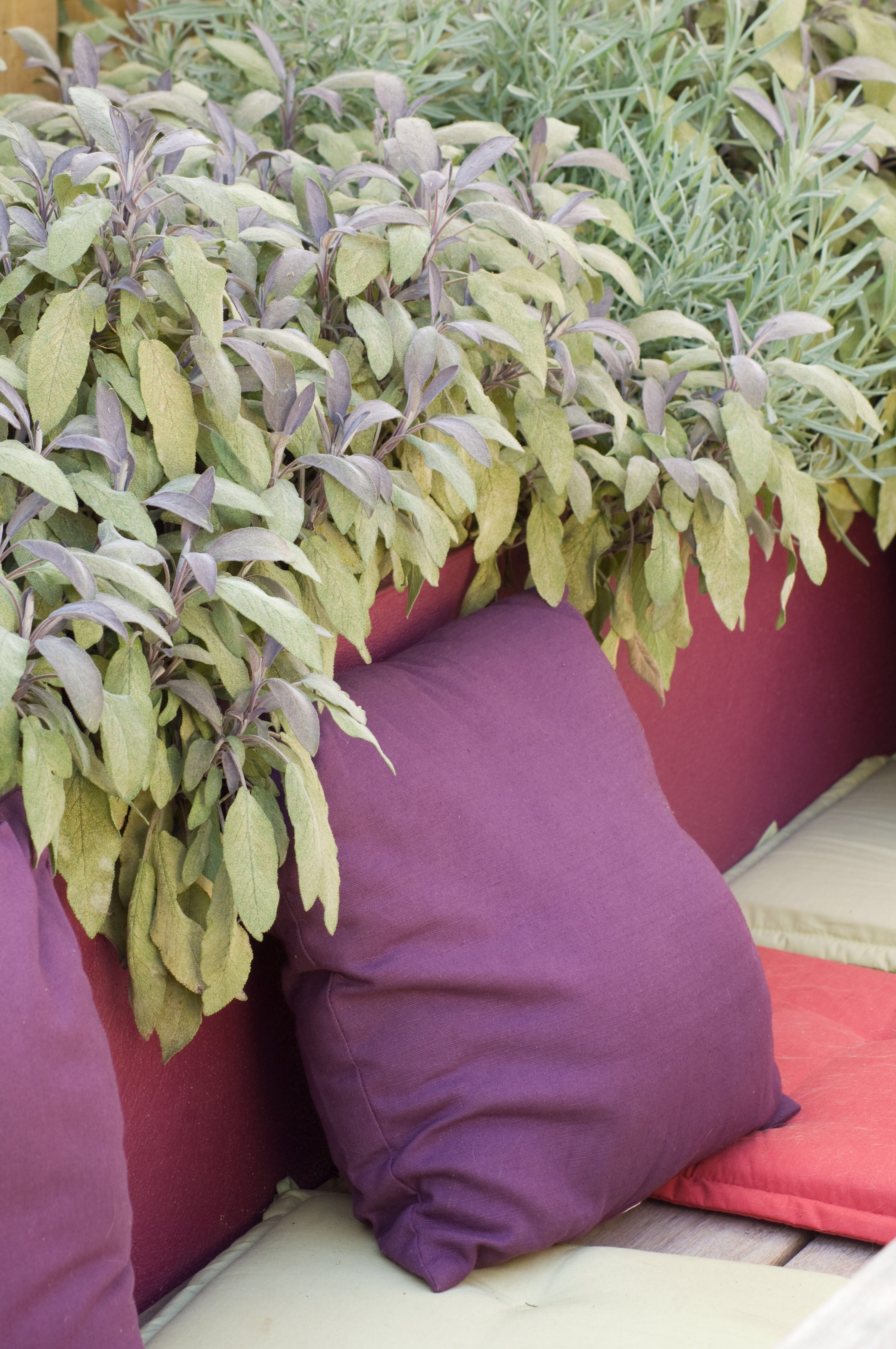 Rendered raised beds always look good in garden layout designs