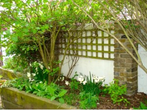 Earth Designs garden design and build 9 years on