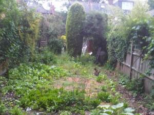 London garden design: Before photo 4