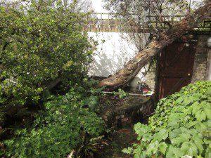 Hackney Garden