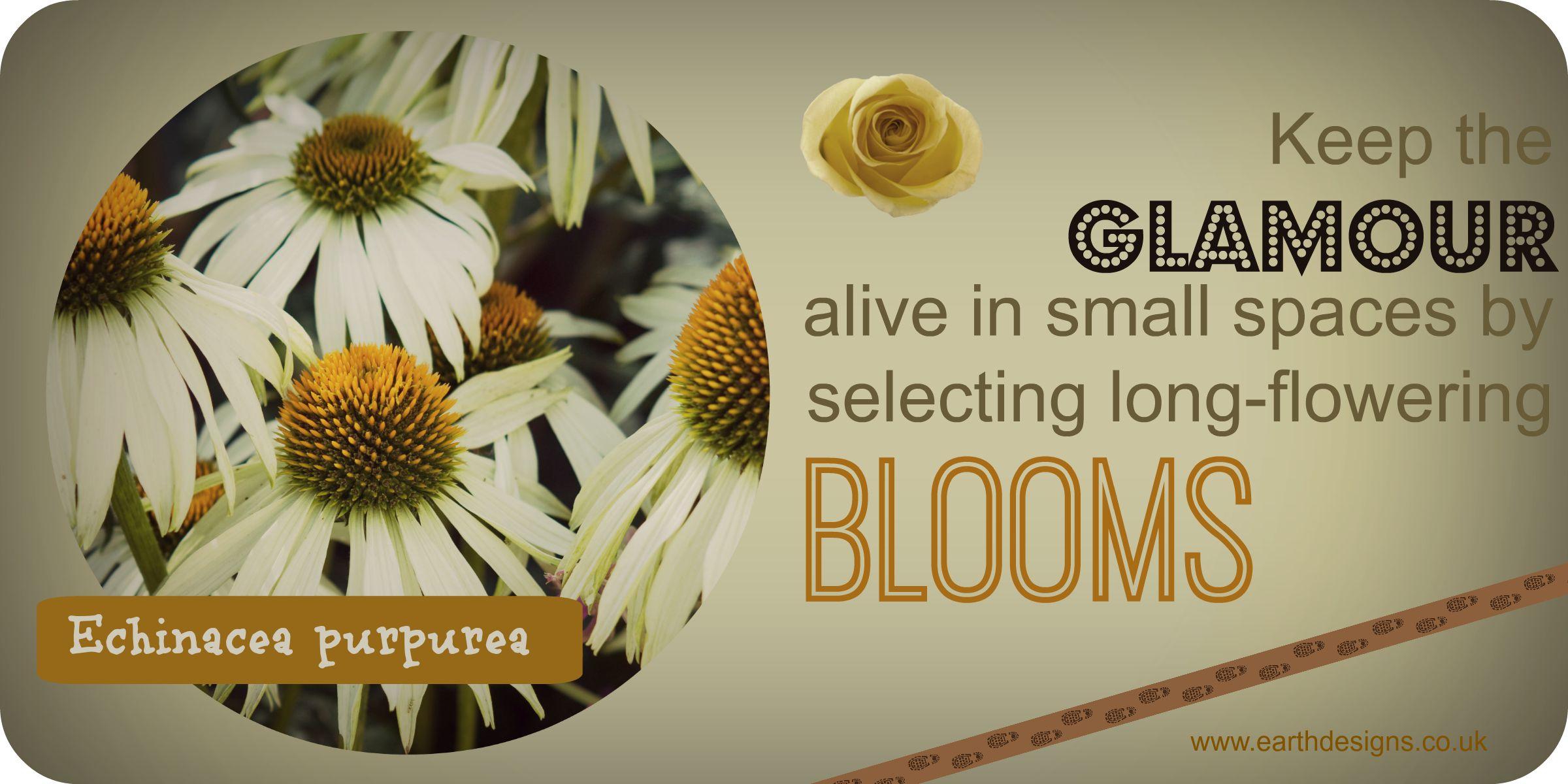 long flowering plants
