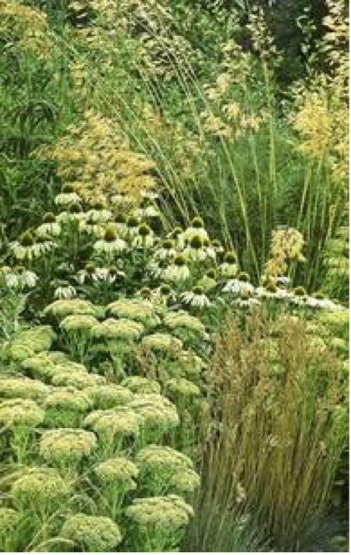 Accentuate textures by grouping similar plants together, uniformly spaced.