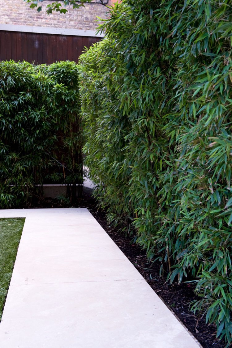 Bamboo is great for providing a tall hedge