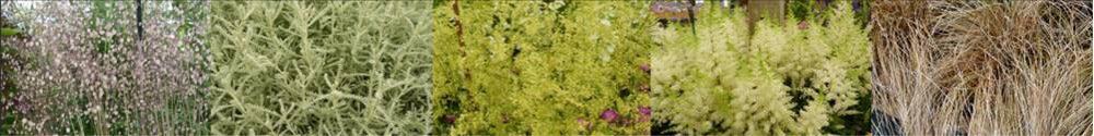 Fine textured plants make a space seem bigger