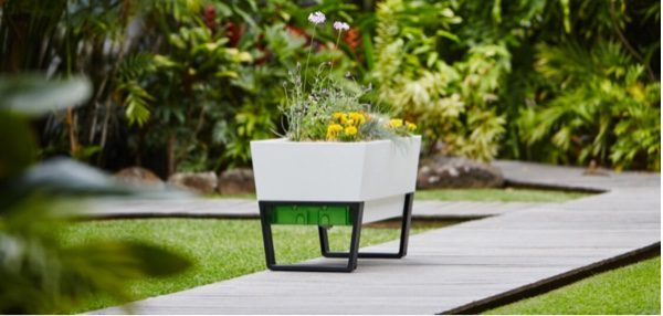 This self-watering planter ticks both boxes