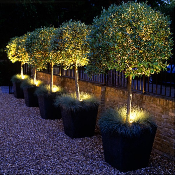 Front Garden Ideas - add trees for a great effect